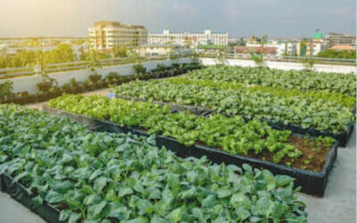 Agriculture urbaine : oxymore ou nouvel enjeu majeur des villes ?